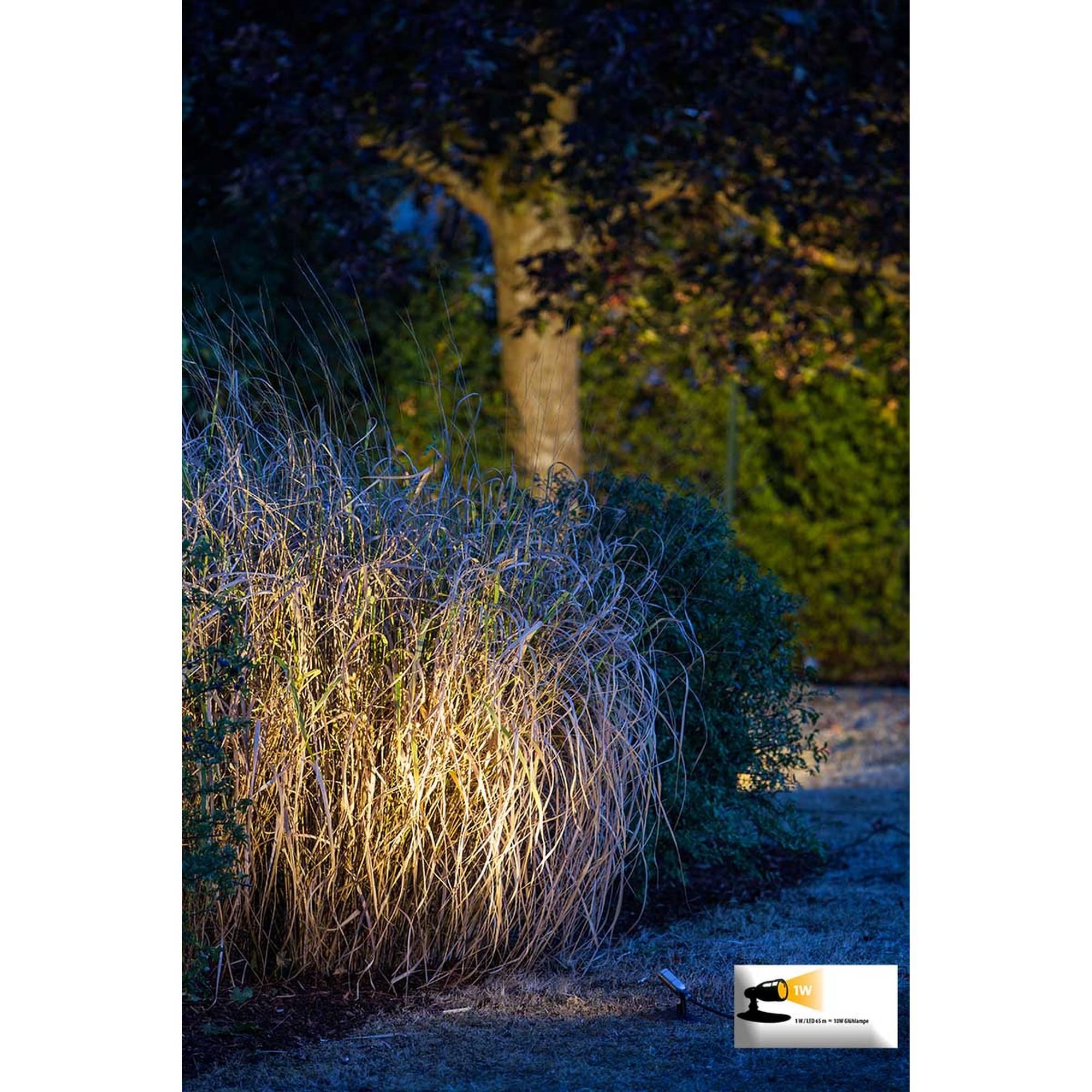 Lampe beleuchtet Busch im Garten